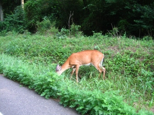 ...grazing by the side of the  road, didn't run away as we came closer...
