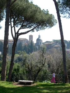Umbrella pines on the Palatine Hill
