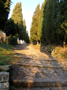 The steep, cypress-lined road that climbs to the Church of Santa Margherita above the famous little hill town of Cortona
