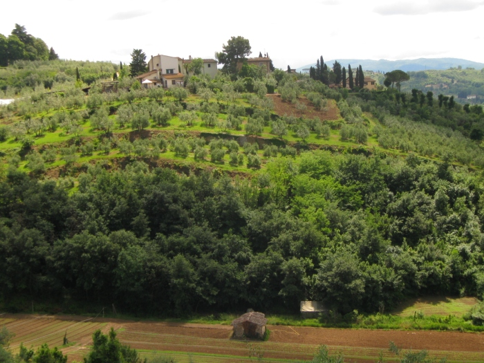 Olive groves and cypresses are an integral part of the Tuscan hills' distinctive beauty - and neither tree changes its colors in autumn