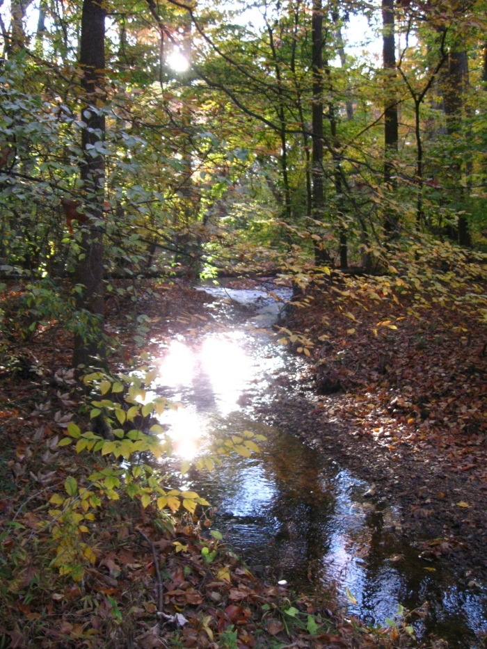 The stream is gilded in the early morning light