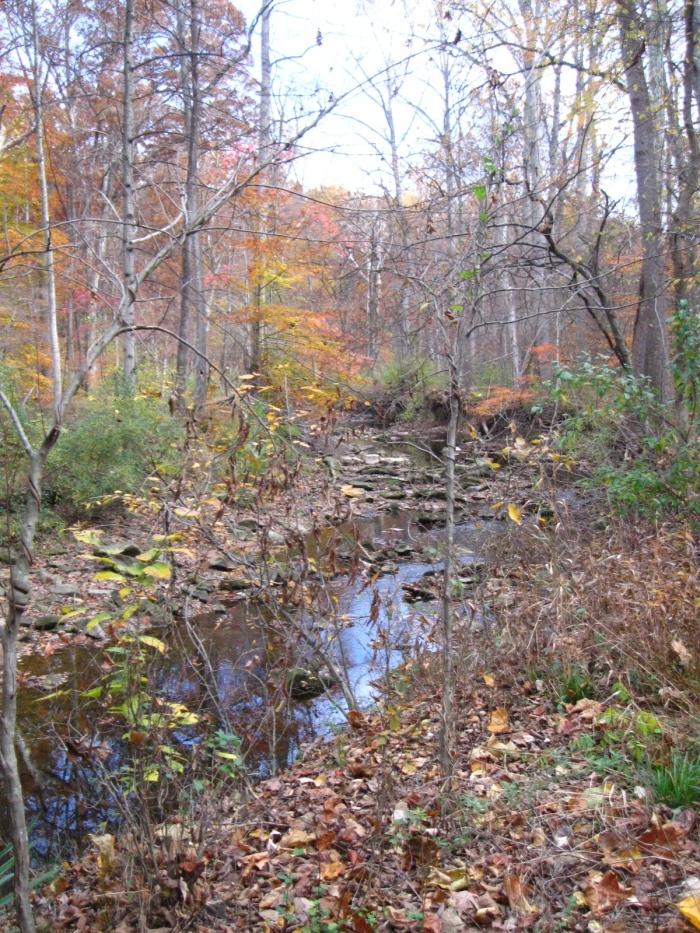 Wilder woods