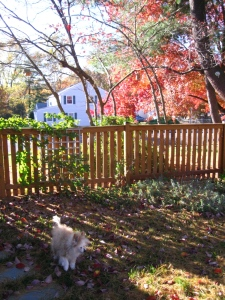 My faithful buddy prefers to stay home and explore the backyard