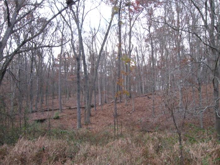 A bleak treescape