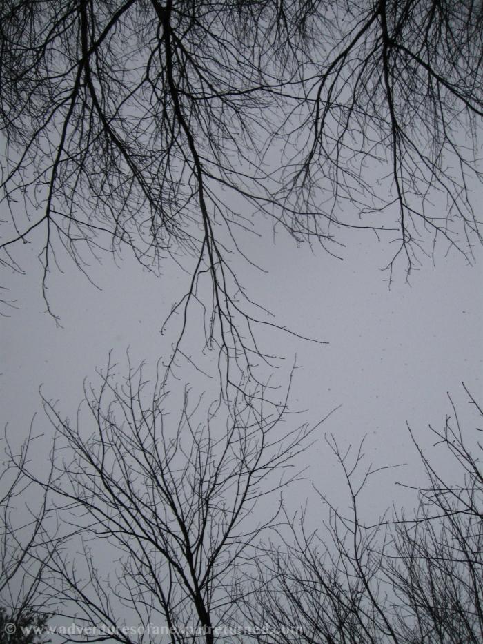 Bare tree fingers rake the frozen sky