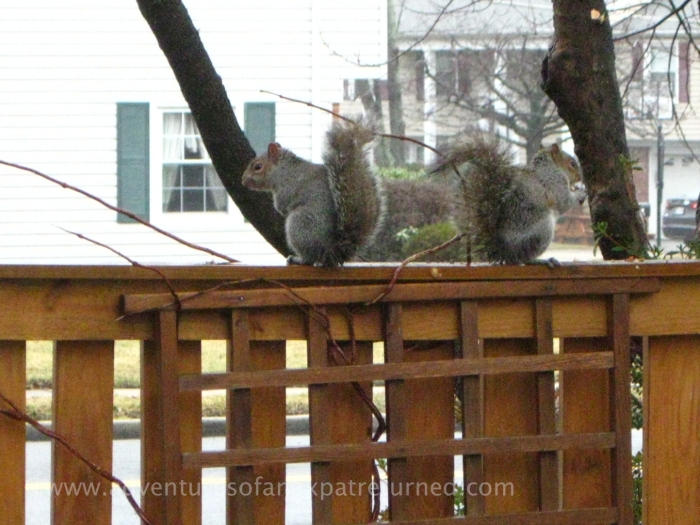 Sitting on the fence to eat their breakfast...