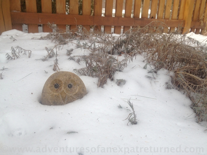 Garden owl, snuggled into the snow next to what remains of last year's lavender, waiting for better weather